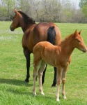 Bar None Ranch Foal and Dam