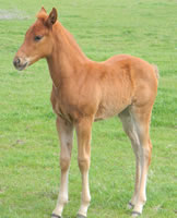 Bar None Ranch: Spring 2011 Foal